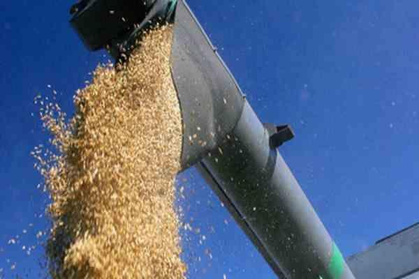 Регионы получили почти 500 тыс. тонн дешевого зерна- Kapital.kz