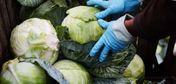 Акиматам регионов поручено закупить капусту в Туркестанской области