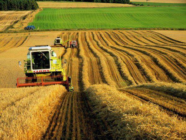 Аграрии получили кредитов на 8 млрд. тенге- Kapital.kz