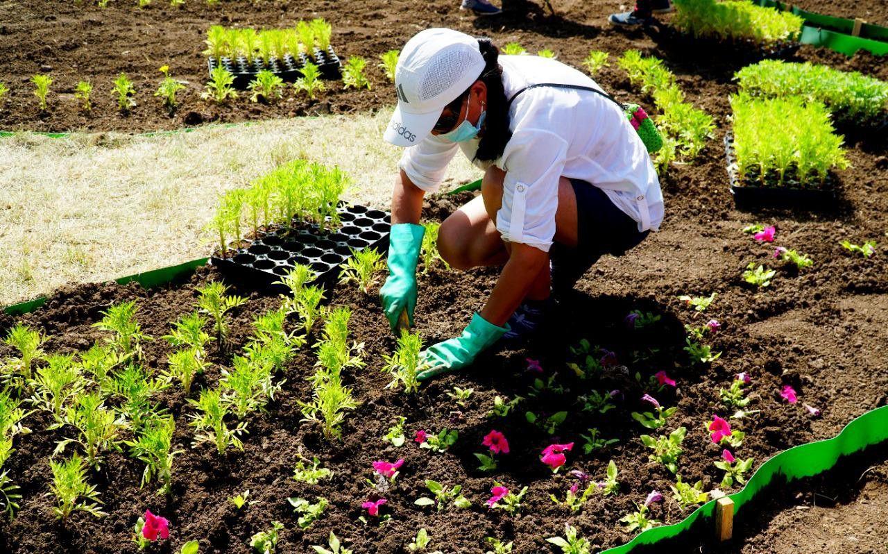 В Нур-Султане продолжаются масштабные работы по озеленению- Kapital.kz