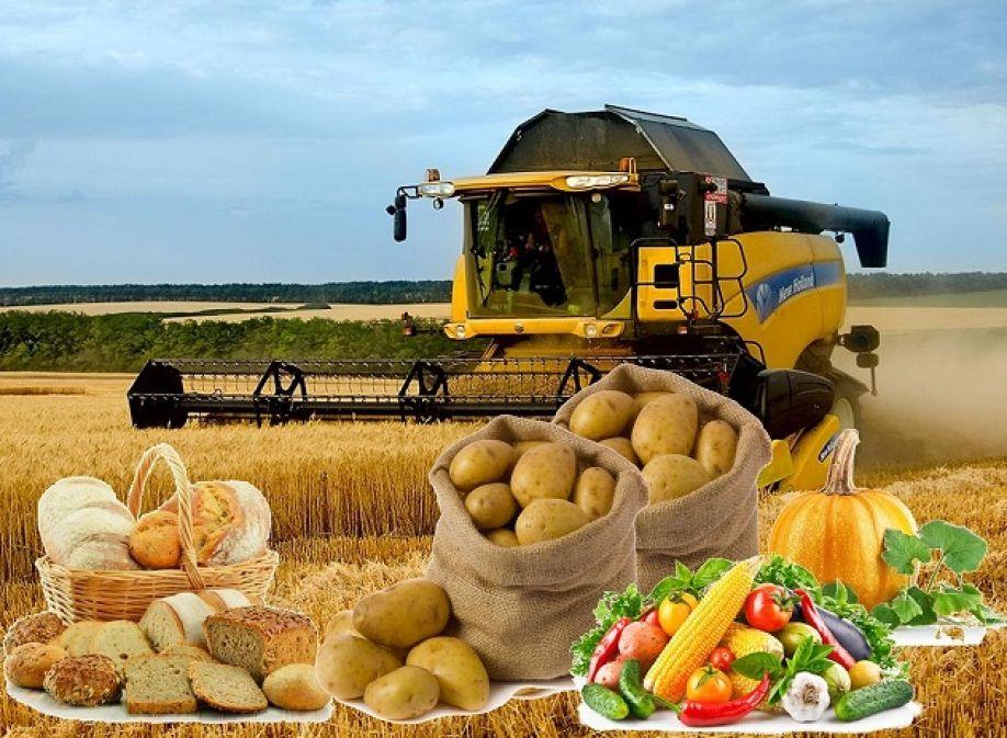 Экспорт сельхозпродукции необходимо увеличить в2,5раза- Kapital.kz