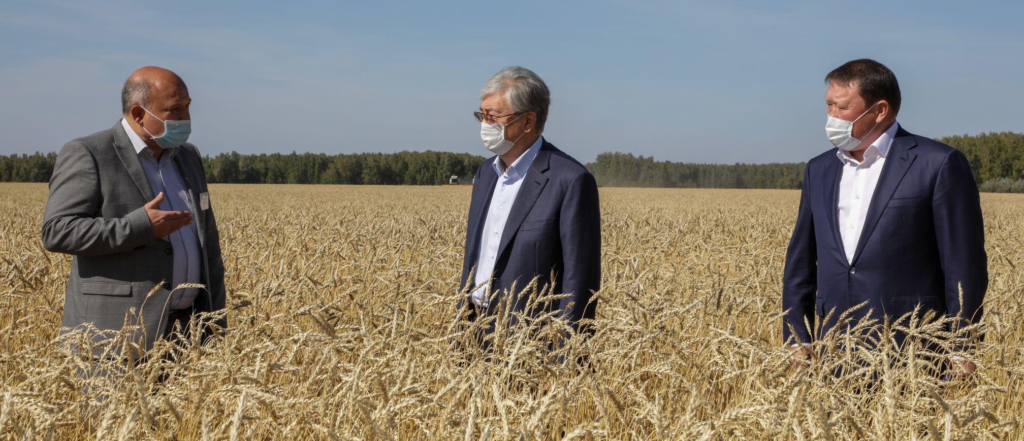 С начала года в аграрный сектор СКО привлекли 61 млрд тенге- Kapital.kz