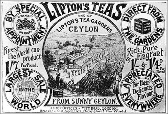 Рекламный постер с изображением чайной плантации Липтона - Kapital.kz