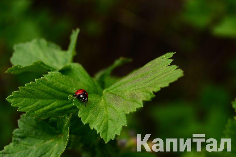 Фото: Валерия Змейкова