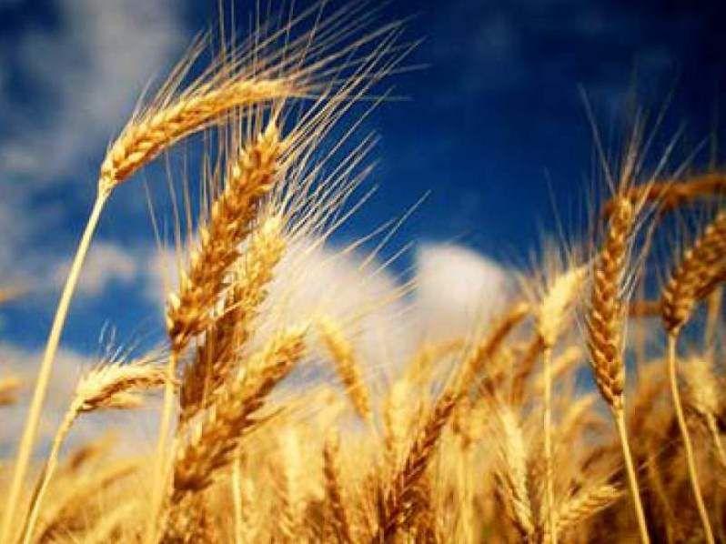 Казахстану грозит дефицит семян - Kapital.kz