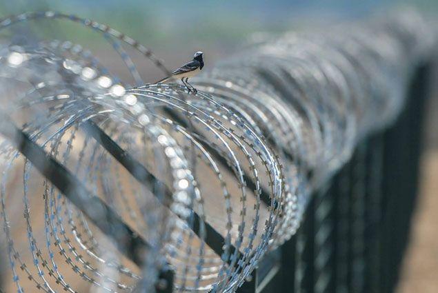 Венгрия отгородится от мигрантов забором- Kapital.kz