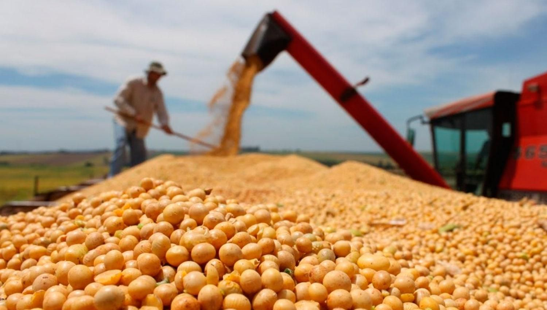 Казахстан ежегодно наращивает площади посевов сои- Kapital.kz