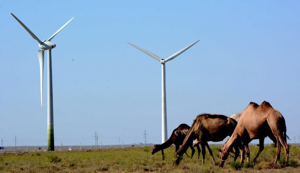 В Мангистауской области – серьезные планы по развитию зеленой энергетики - Kapital.kz