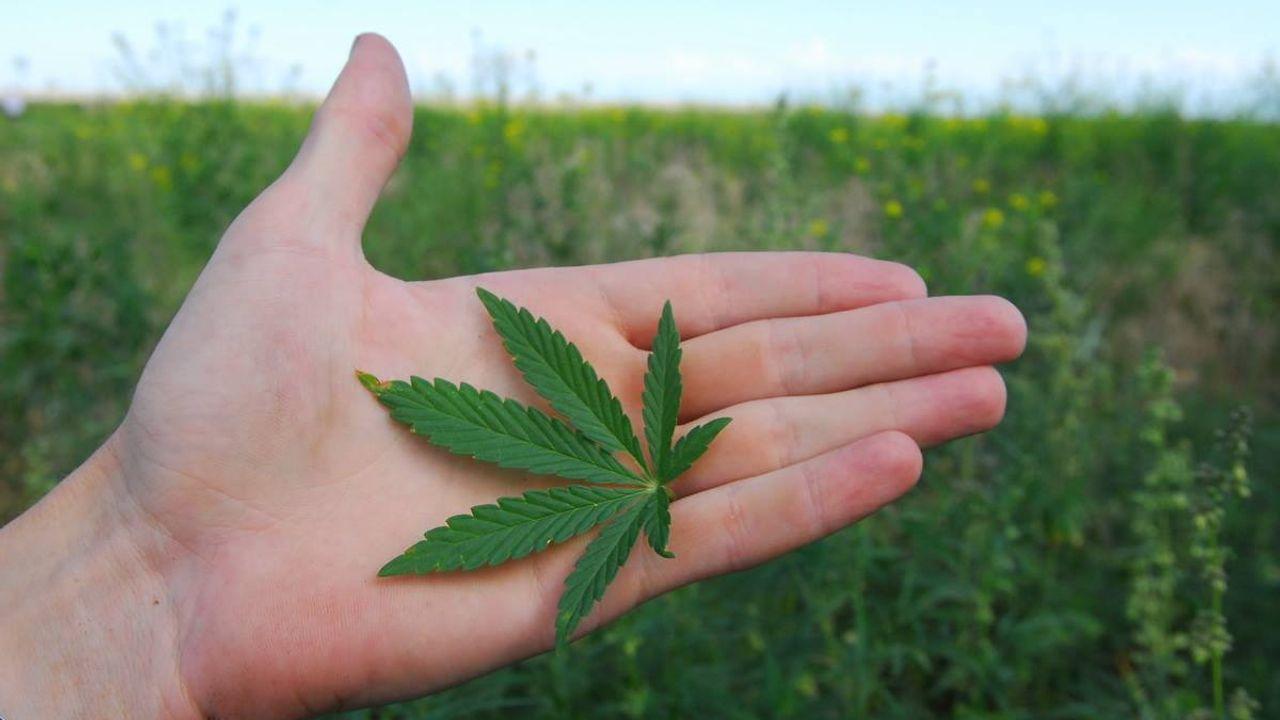 G конопля сколько длится синдром отмены марихуаны