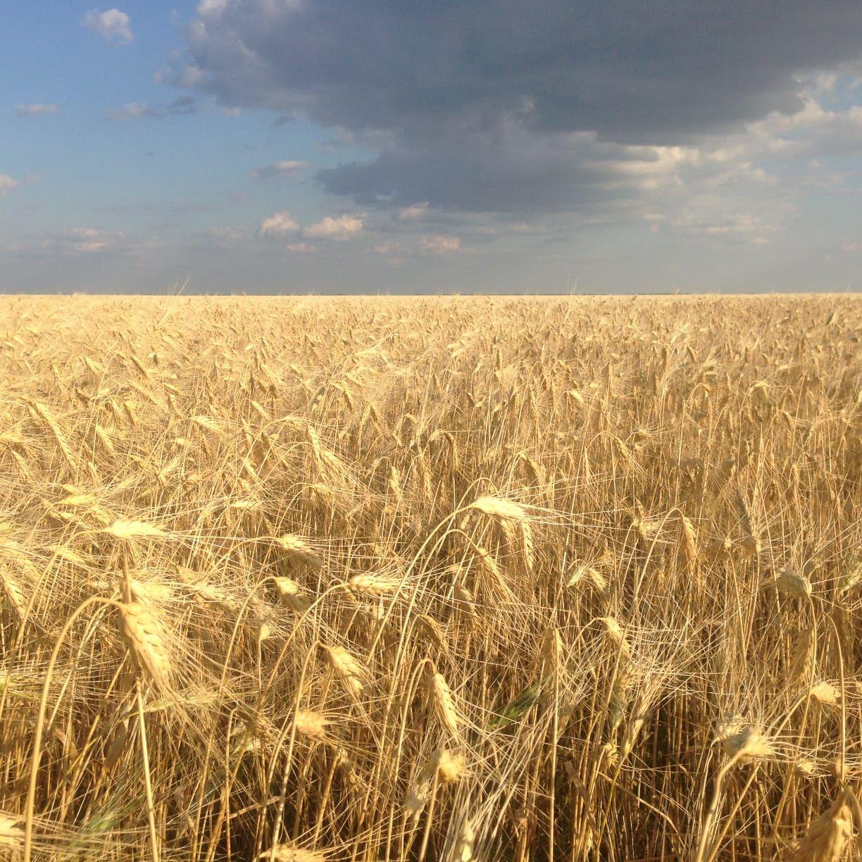 Выживет ли казахстанский рынок органики без системы сертификации?- Kapital.kz