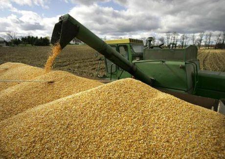 Рынок КНР бесперспективен для зерна Казахстана- Kapital.kz