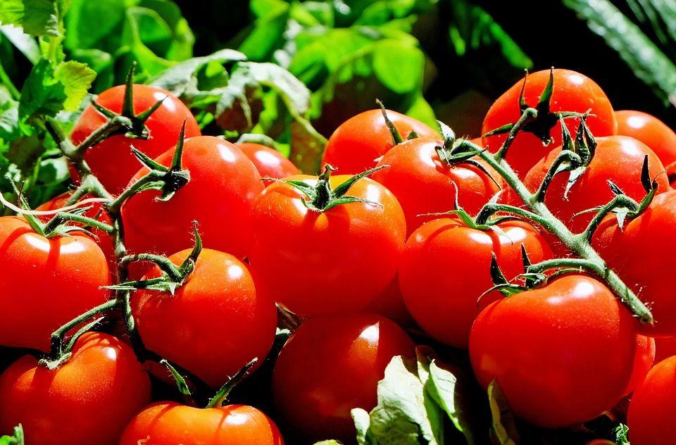 Информация о вирусах в томатах из РК вымысел- Kapital.kz